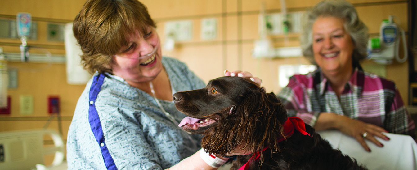 Volunteer and therapy dog greets an inpatient